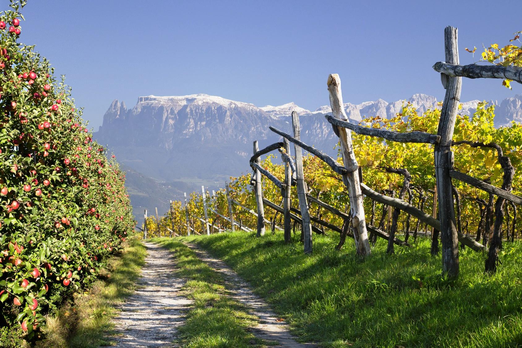 Weinberg und Äpfel im Vinschgau