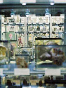 Das Berliner Medizinhistorische Museum der Charité, Präparatevitrinen