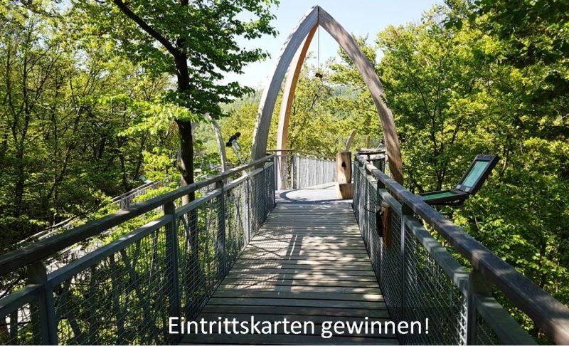 Baumkronenweg im Buchenwald, Nationalpark