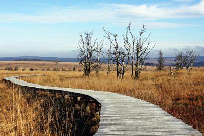 Weg durch den Naturpark Hohes Venn