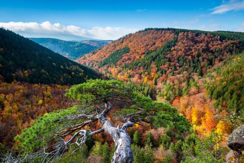 Blick zum Brocken im Harz - Harzer Hexen-Stieg
