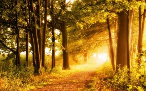 Malerischer Herbstwald in der Uckermark lädt zum Wandern ein