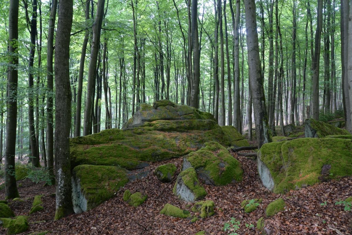 Ebersberger Felsenmeer - Nibelungensteig