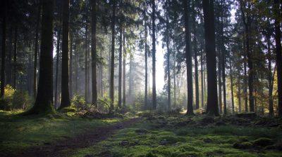 Wandern im Odenwald - Nibelungensteig