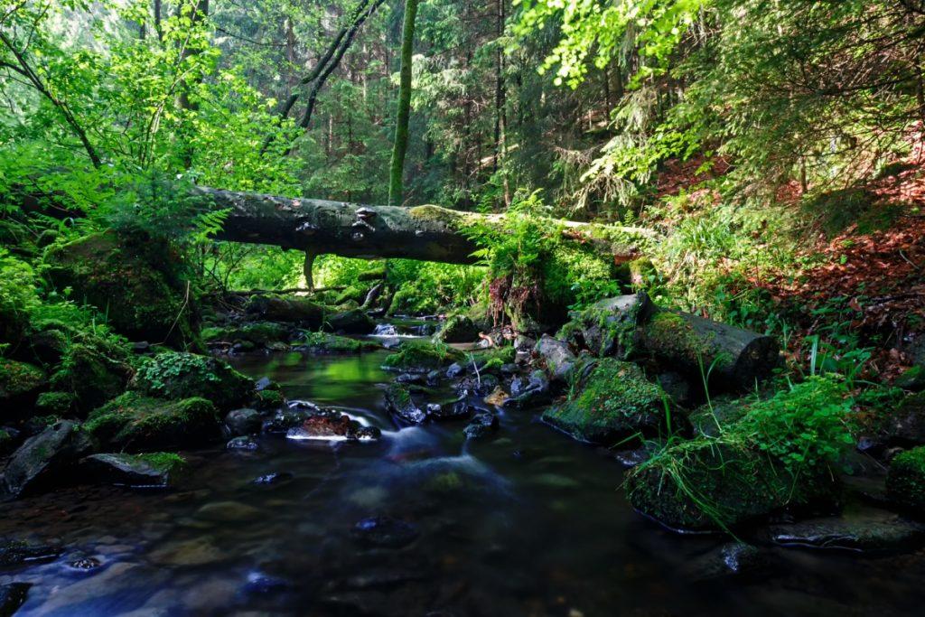 Silberbachtal im Teutoburger Wald - Hermannsweg
