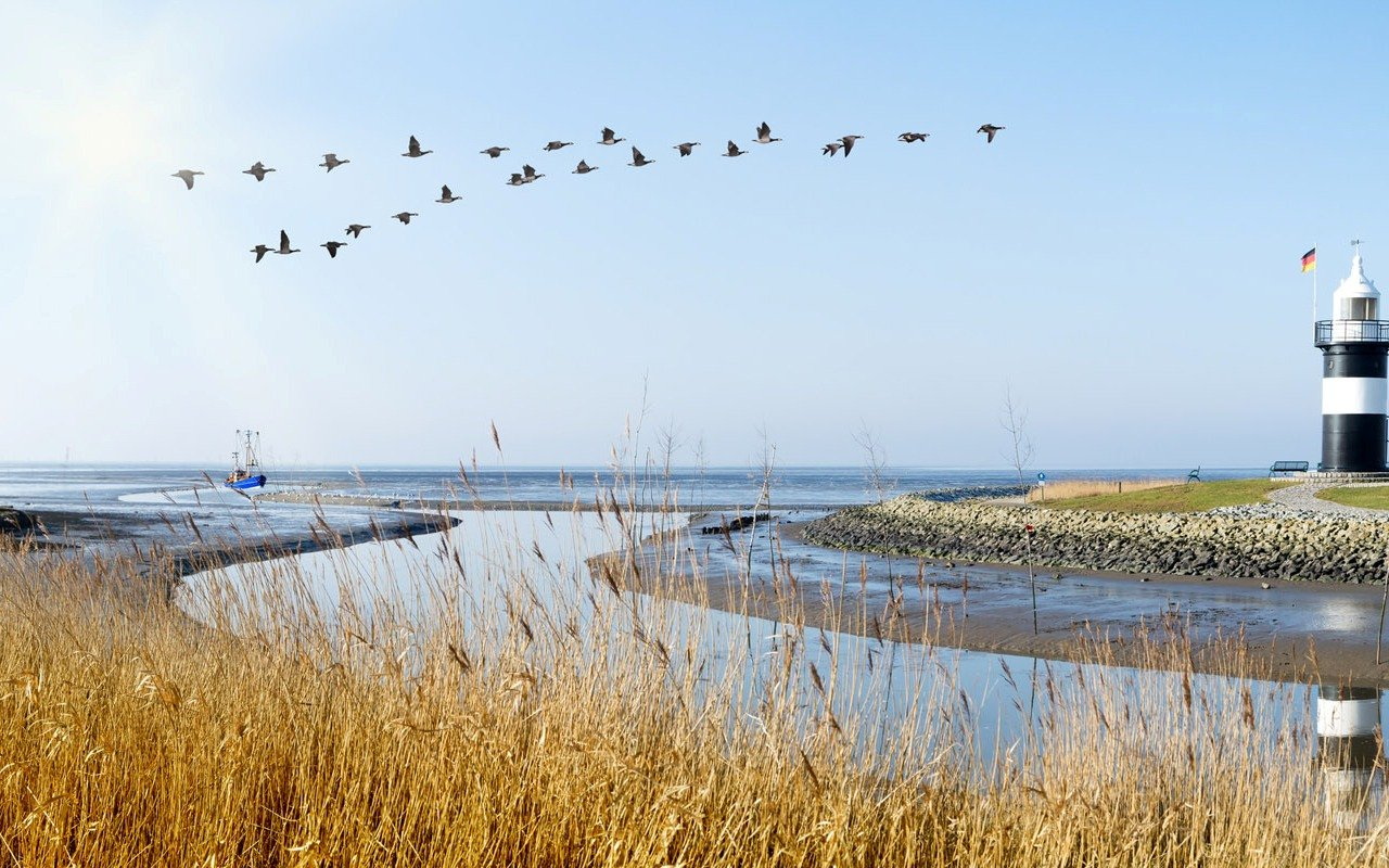 Das Wattenmeer: Weltnaturerbe in Deutschland