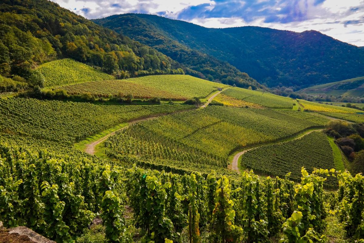 Weinberge im Ahrtal - Ahrsteig