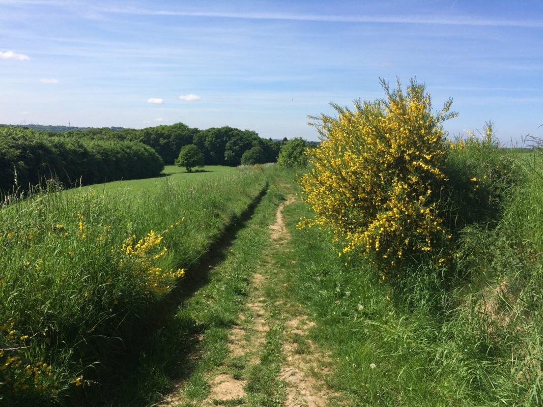 Wanderweg im Bergischen Land - Landscheider Weg