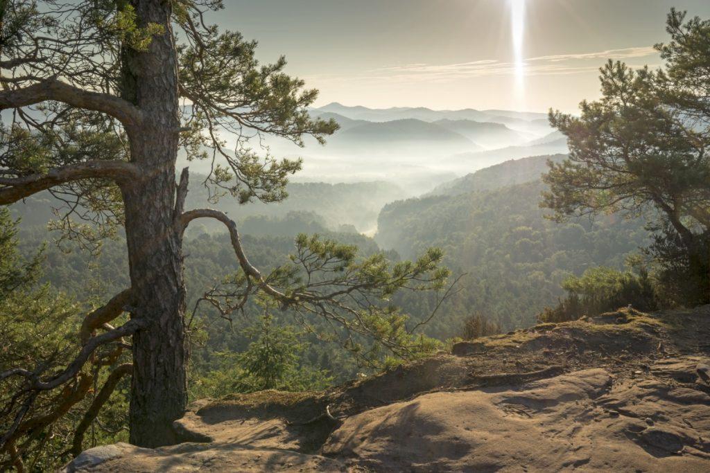 Blick auf das Dahner Felsenland - Pfälzer Waldpfad