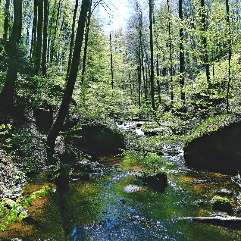 Karlstalschlucht im Pfälzer Wald - Pfälzer Waldpfad