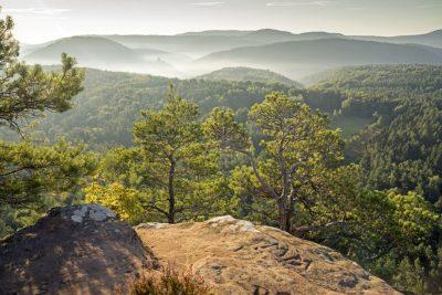 Pfälzer Wald Panorama - Pfälzer Waldpfad