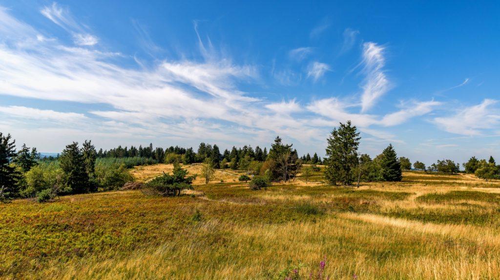 Heidelandschaft auf dem Kahlen Asten - Rothaarsteig