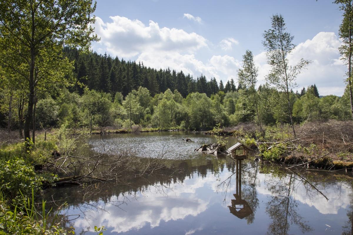 Naturschutzgebiet Schwarzbachtal - Rothaarsteig