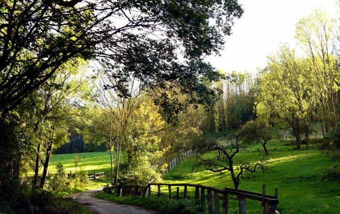 Idyllischer Weg bei Oerlinghausen im Teutoburger Wald