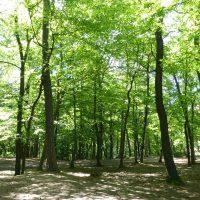 Wandern im Frankenwald - Nortwaldweg