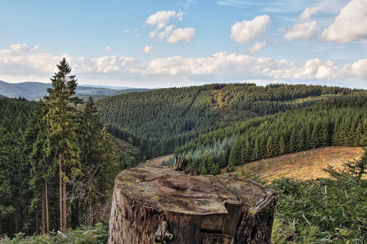 Blick vom Rothaarsteig im Sauerland - Sauerland-Höhenflug