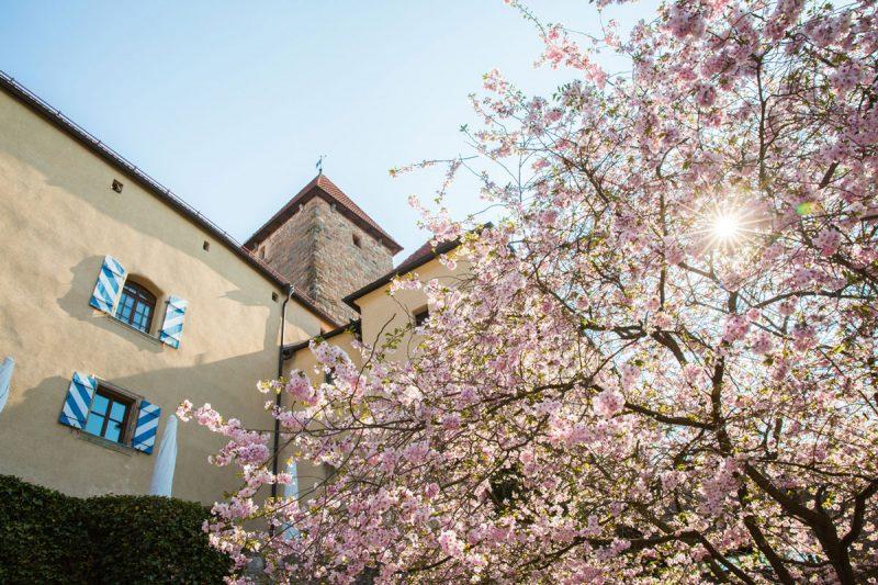 hotel-burg-wernberg-kirschblueten