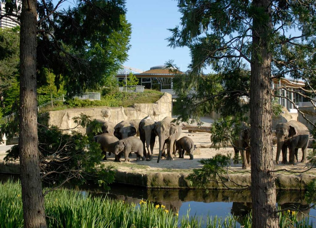 Elefantenpark im Kölner Zoo - Zoos Deutschland
