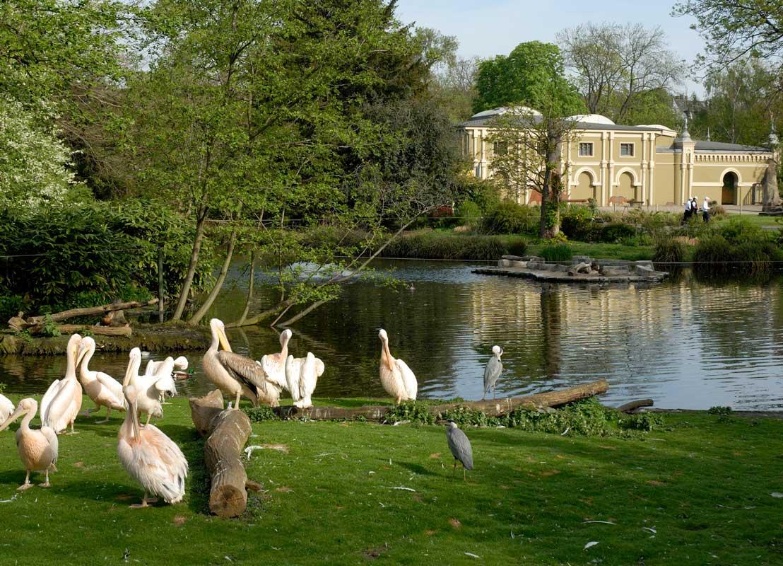 Pelikanweiher im Kölner Zoo - Zoos Deutschland