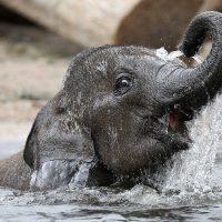 Baby-Elefant - Zoos Deutschland