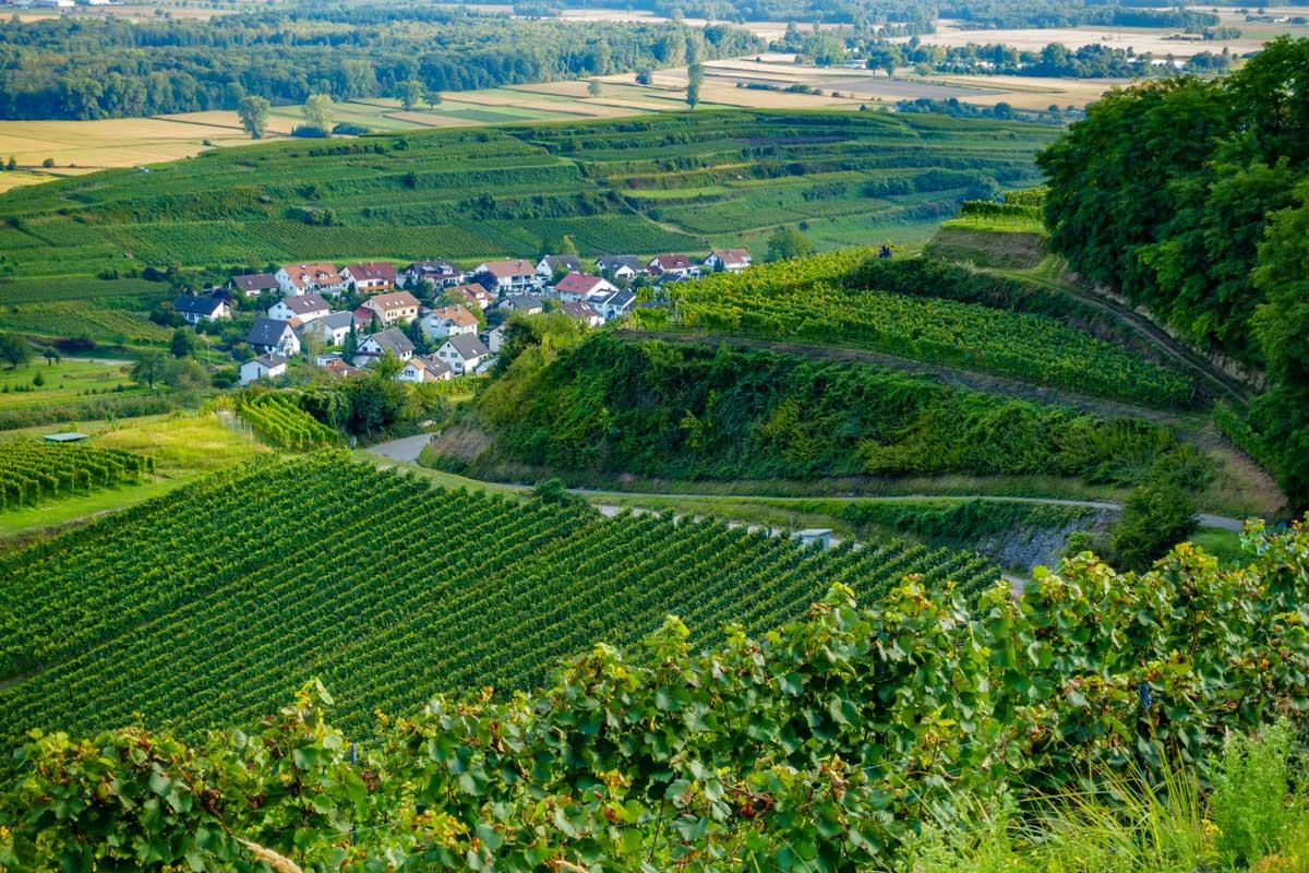 Blick auf Ihringen - Kaiserstuhlpfad
