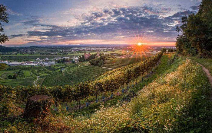 Blick auf badische Reblandschaft - Ortenauer Weinpfad