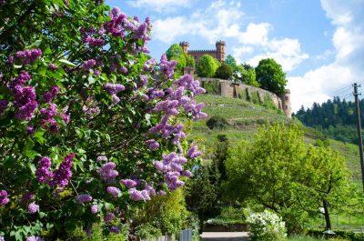 Schloss Ortenberg - Ortenauer Weinpfad