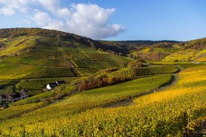 Weinberge im Ahrtal - Rotweinwanderweg