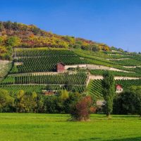 Saale-Unstrut-Weinberge - Saale-Weinwanderweg
