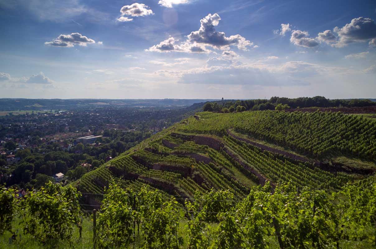 Weinhänge an der Elbe - Der Sächsische Weinwanderweg