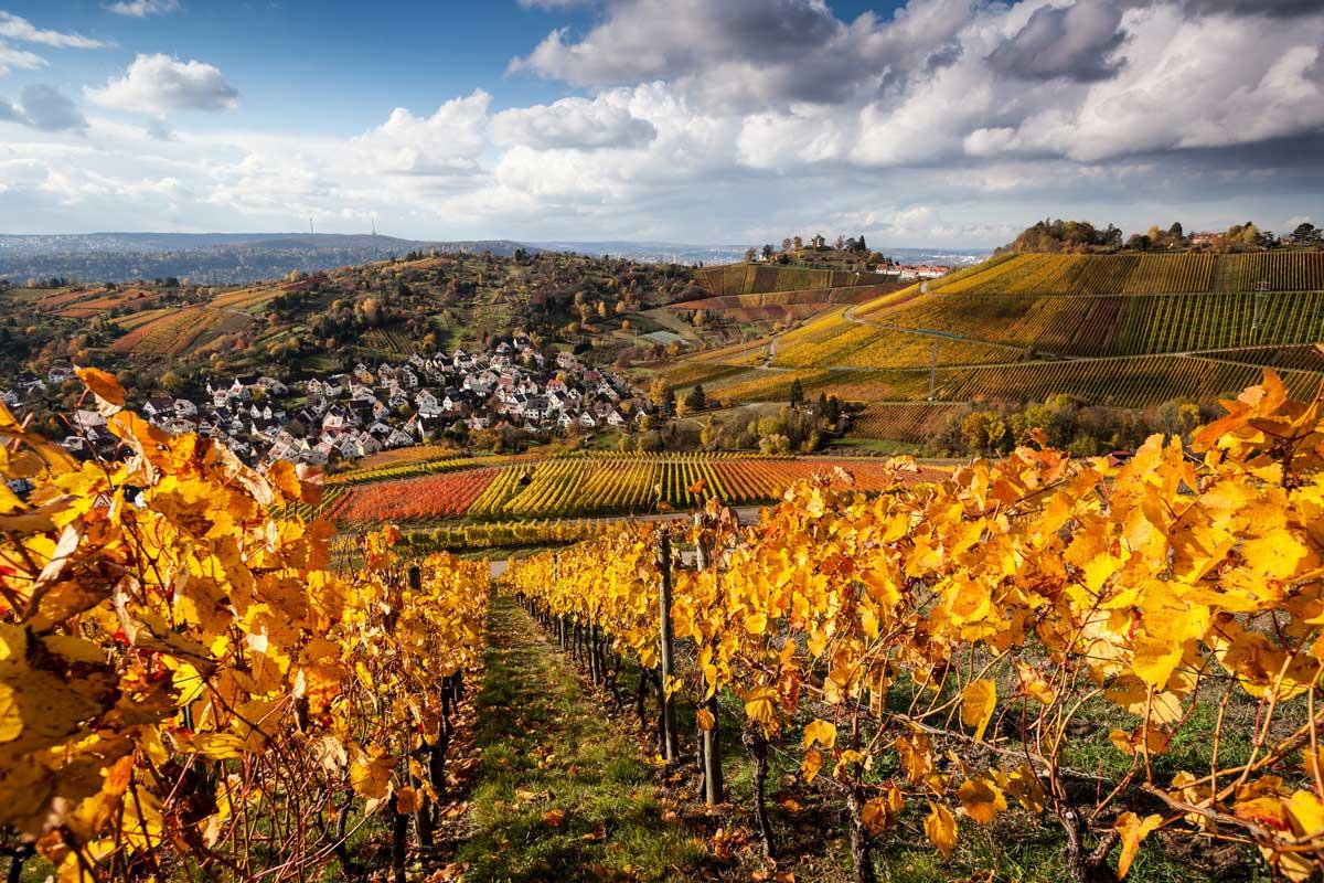 Herbstliche Weinberge bei Rotenberg - Stuttgarter Weinwanderwege