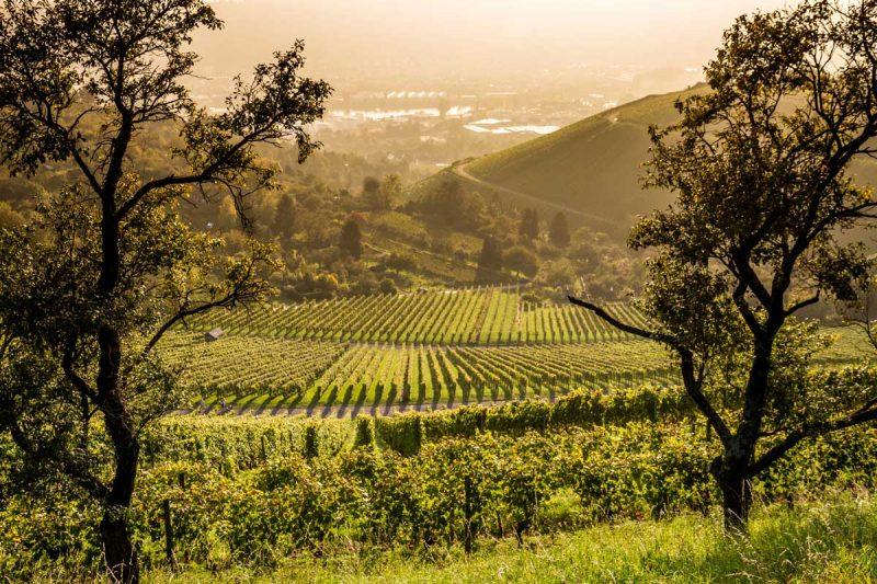 Blick auf Stuttgarter Weinberge - Stuttgarter Weinwanderwege