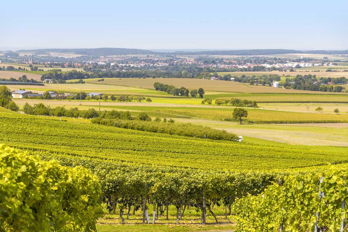Rebenlandschaft in Hohenlohe - Der Württembergische Weinwanderweg