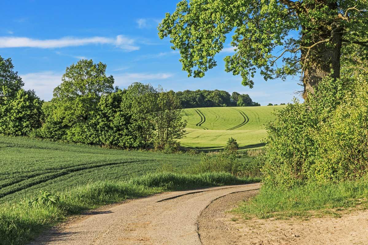 Feldweg in der Holsteinischen Schweiz - Mönchsweg