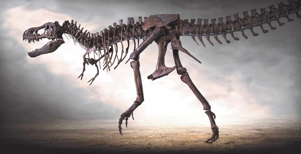 T.rex Rocky