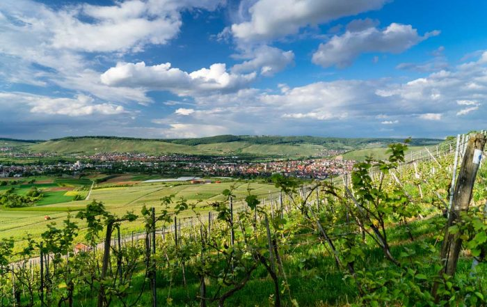 Weinberge im Remstal - Remstal-Route