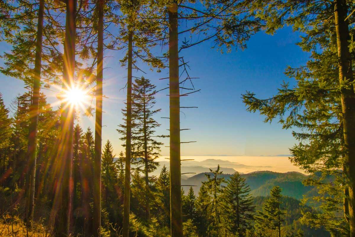 Schwarzwald Panorama - Westweg