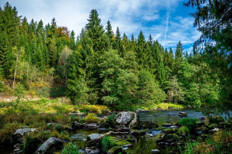 Im Bayerischen Wald - Goldsteig - Trans Bayerwald