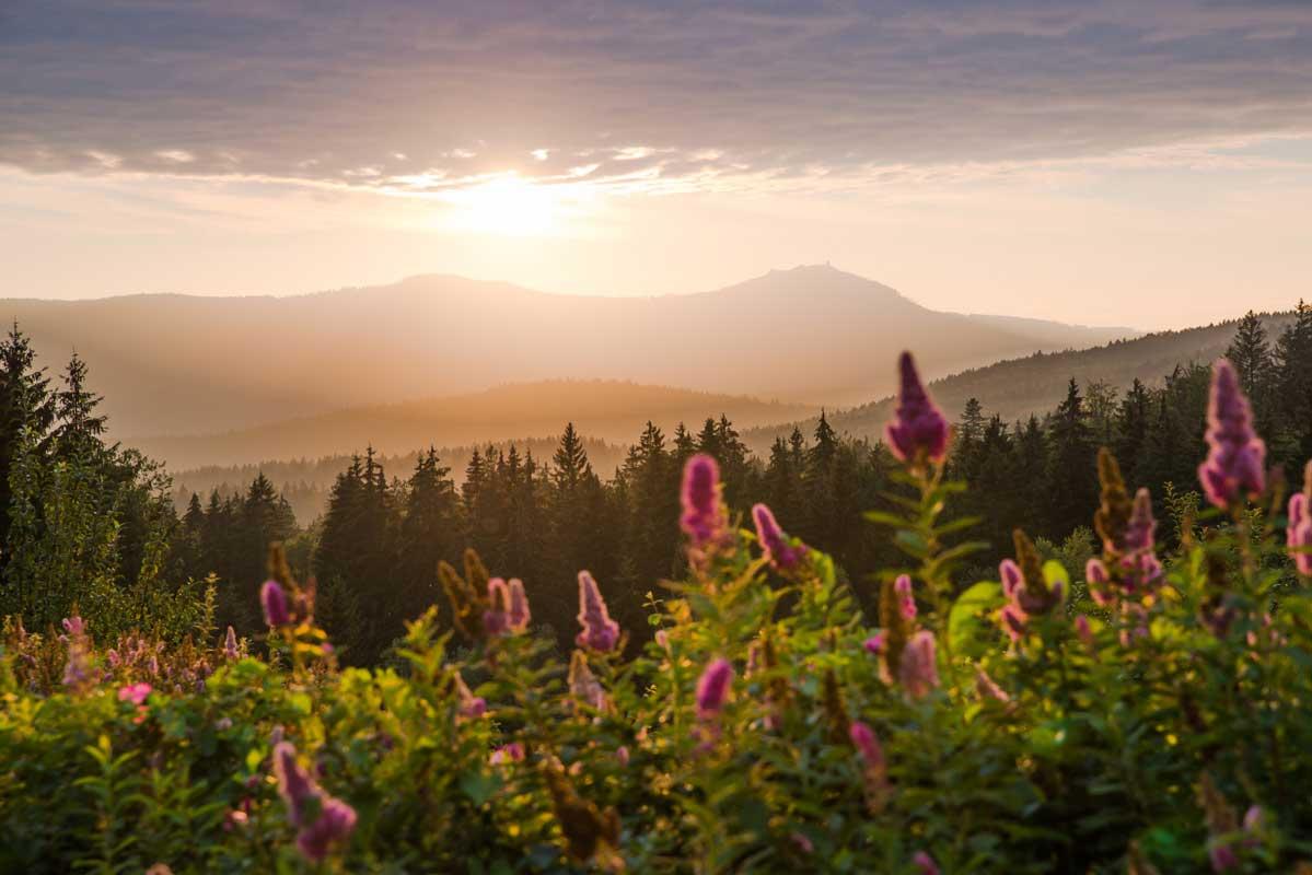 Blick auf den Großen Arber - Goldsteig - Trans Bayerwald