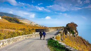 In den Lavaux Weinbergen im Herbst