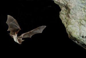 Fledermaus - Ausflugsziele für Naturfreunde