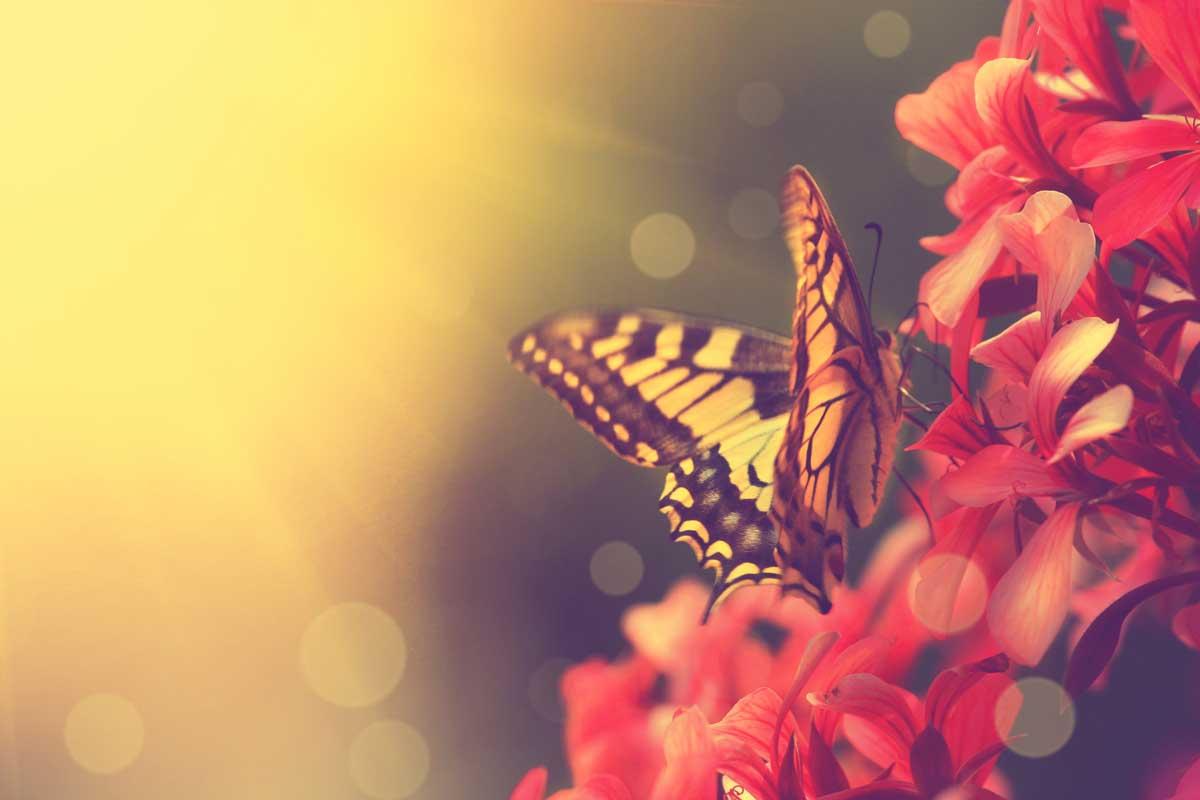 Schmetterling - Ausflugsziele für Naturfreunde