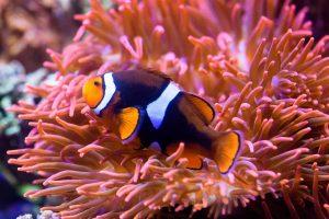 Clownfisch - Ausflugsziele für Naturfreunde