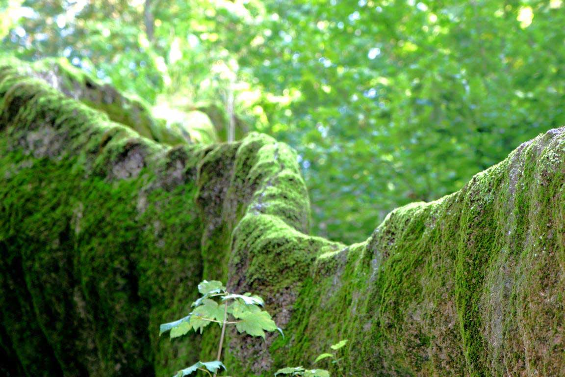 Geotop Wachsender Felsen Usterling - Niederbayerntour