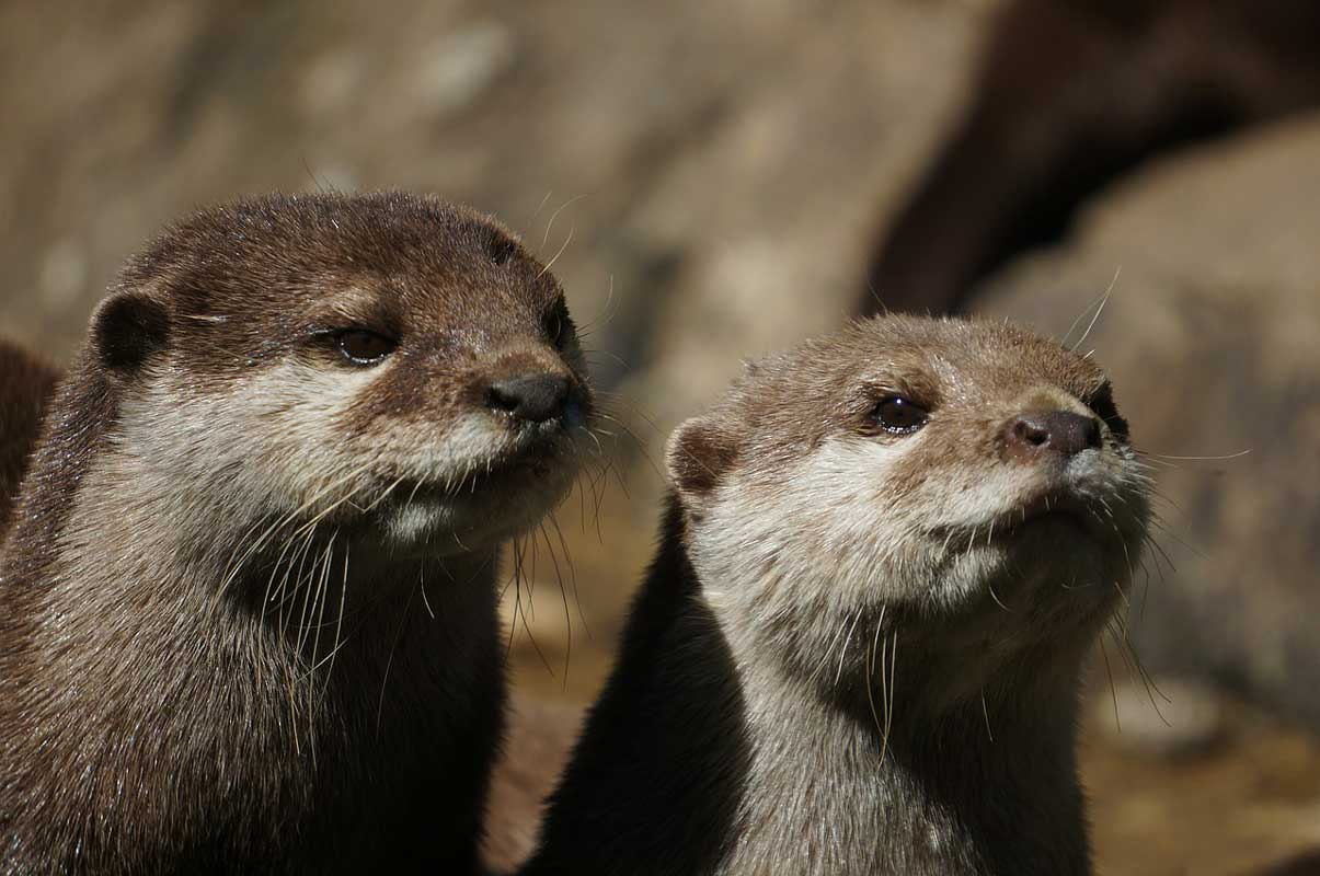 Otter - Ausflugziele für die ganze Familie