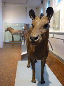 Urpferdchen und seine Nachfahren - Deutsches Pferdemuseum