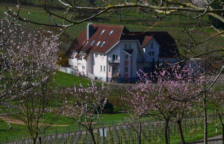 Hotel Castell Leinsweiler - Totale