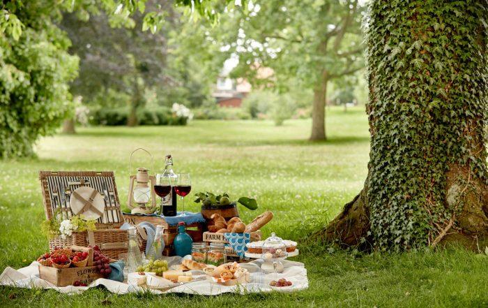 Picknick auf einer grünen Wiese unter einem alten Baum