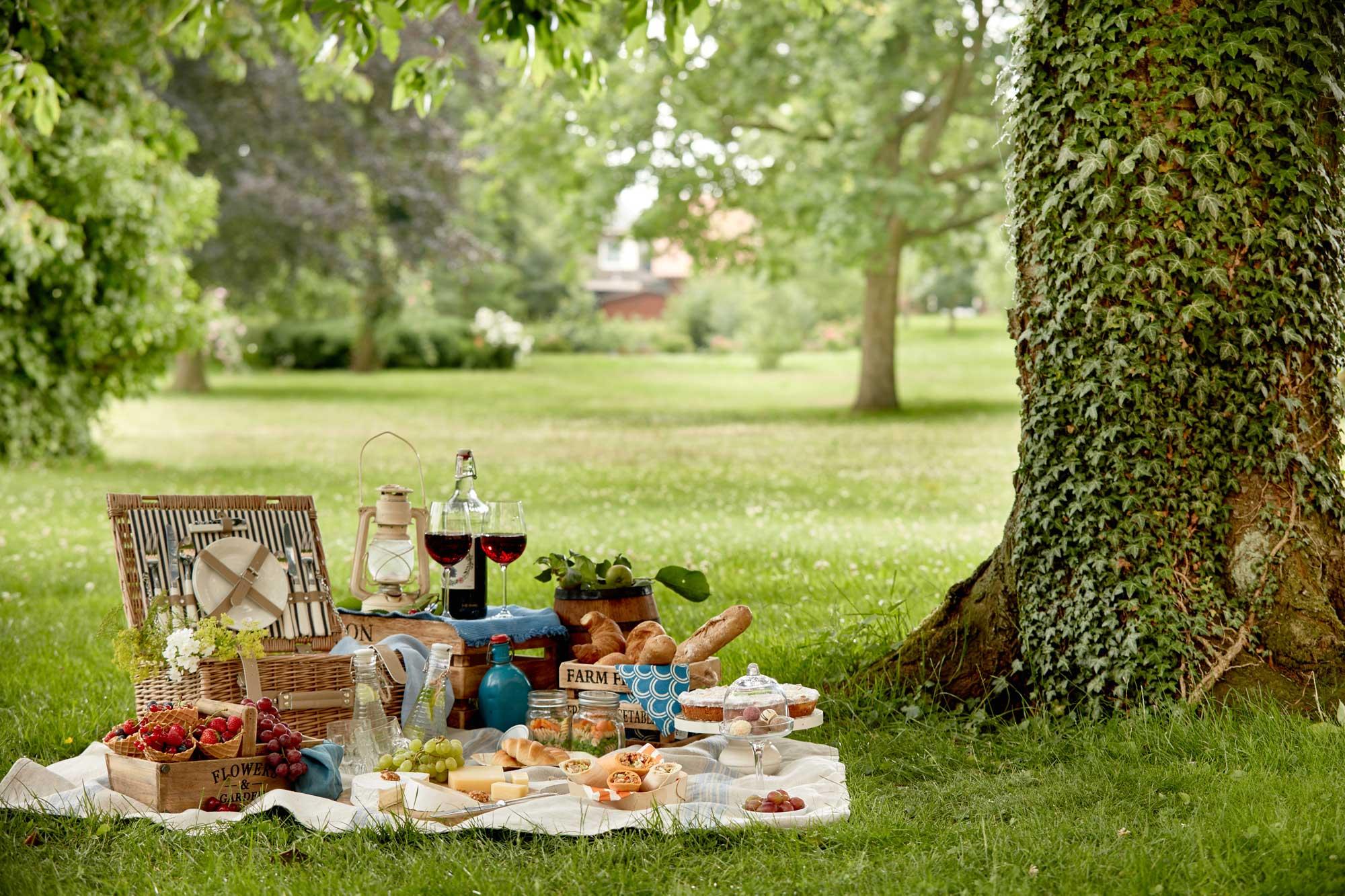 Picknick auf einer grünen Wiese unter einem alten Baum - Wander-Gewinnspiel