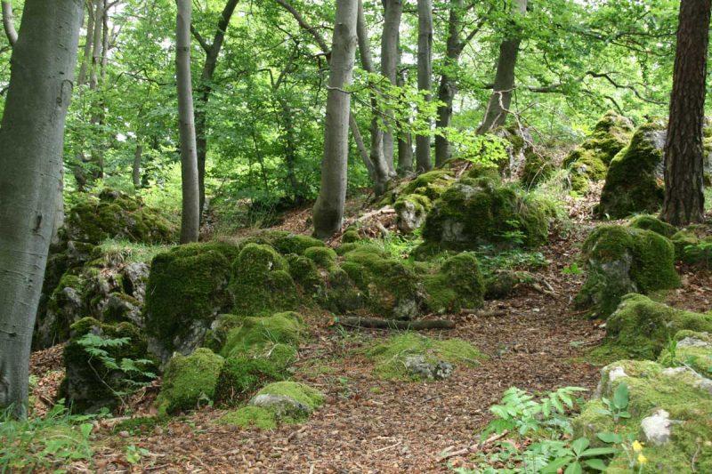 Waldweg in Franken - Europäischer Wasserscheideweg
